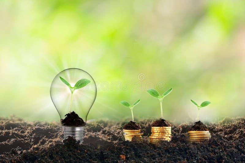 Pianta che cresce nella lampadina, nuova vita sul concetto di istruzione di idea di affari di sviluppo di ecologia di crescita de immagine stock