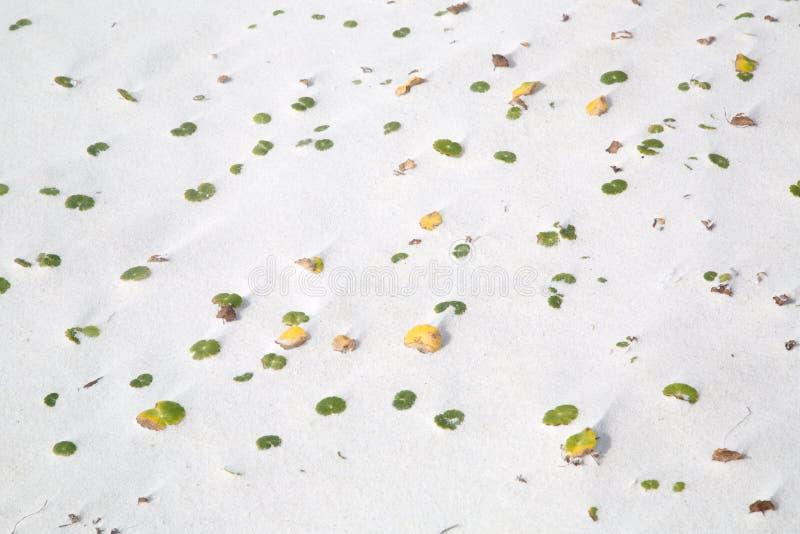 Pianta che cresce sulla spiaggia sabbiosa fotografia stock