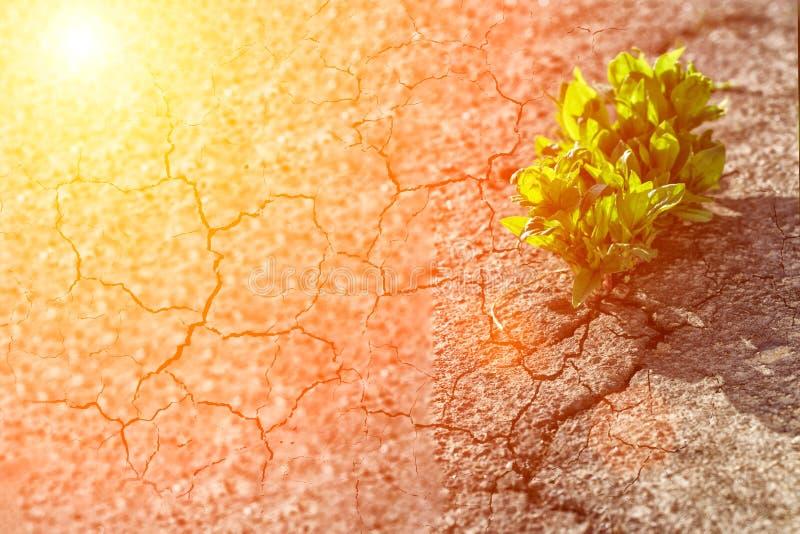 pianta che cresce sulla via della crepa, fuoco molle, testo in bianco immagini stock