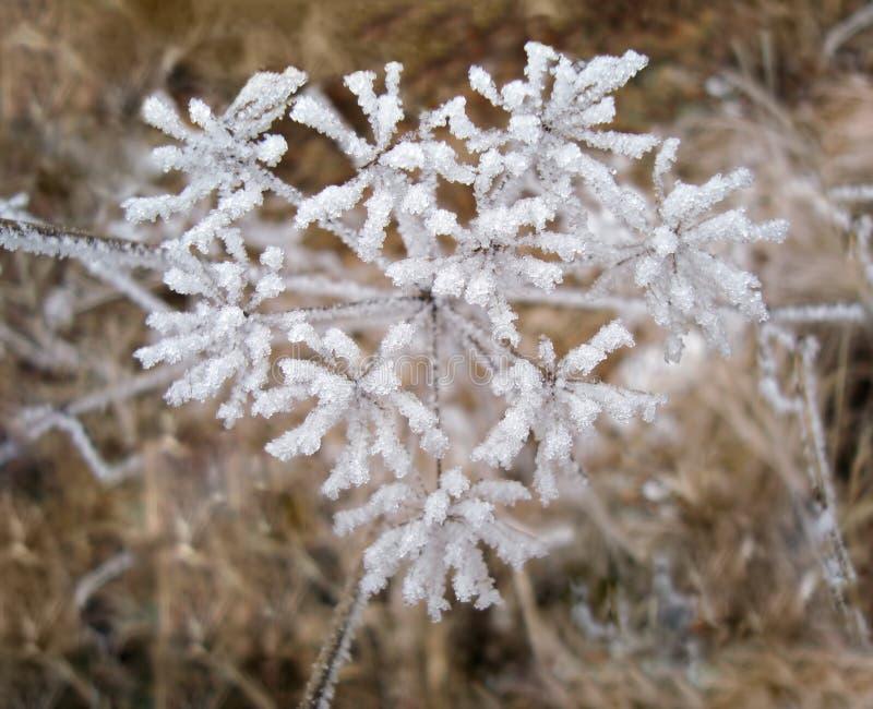 Pianta congelata coperta in neve e ghiaccio nella forma del cuore immagini stock libere da diritti