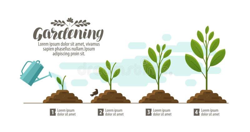 Pianta crescente giardinaggio, orticoltura infographic Agricoltura, coltivante sviluppo, natura, concetto del germoglio Vettore illustrazione vettoriale