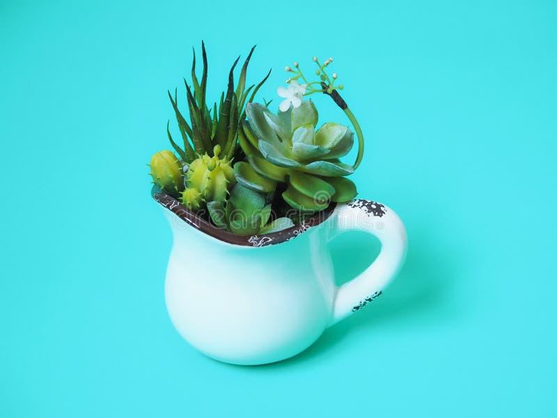 Pianta da appartamento in vasi con il cactus verde fotografia stock