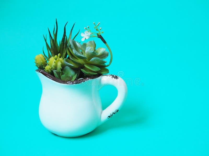 Pianta da appartamento in vasi con il cactus verde immagine stock