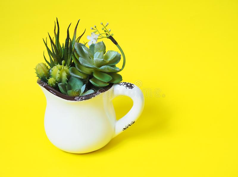 Pianta da appartamento in vasi con il cactus verde fotografia stock libera da diritti