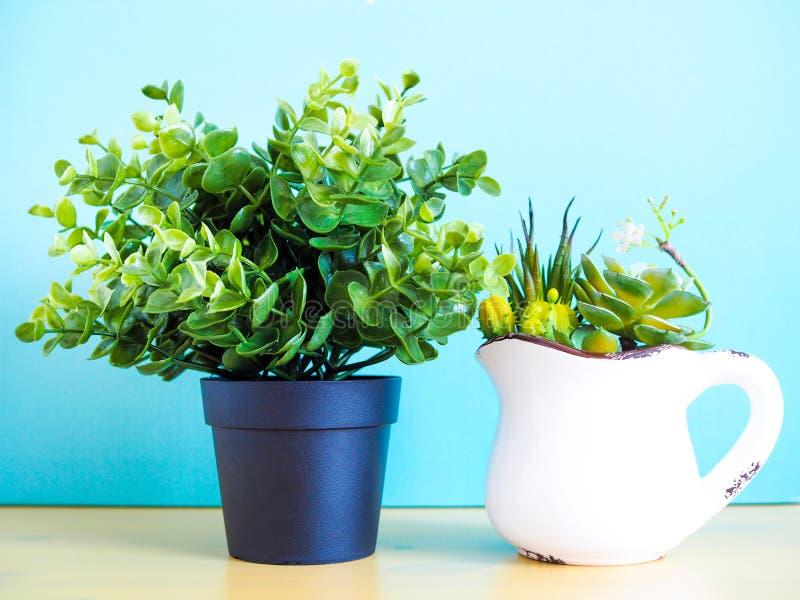 Pianta da appartamento in vasi con il cactus verde fotografie stock libere da diritti