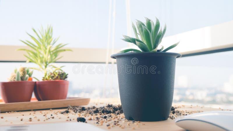 Pianta da vaso caduta sullo scrittorio fotografia stock immagine di interno piante 71109720 - Vaso da interno ...