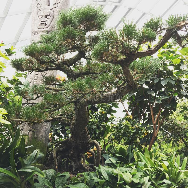 Pianta dei bonsai fotografia stock libera da diritti