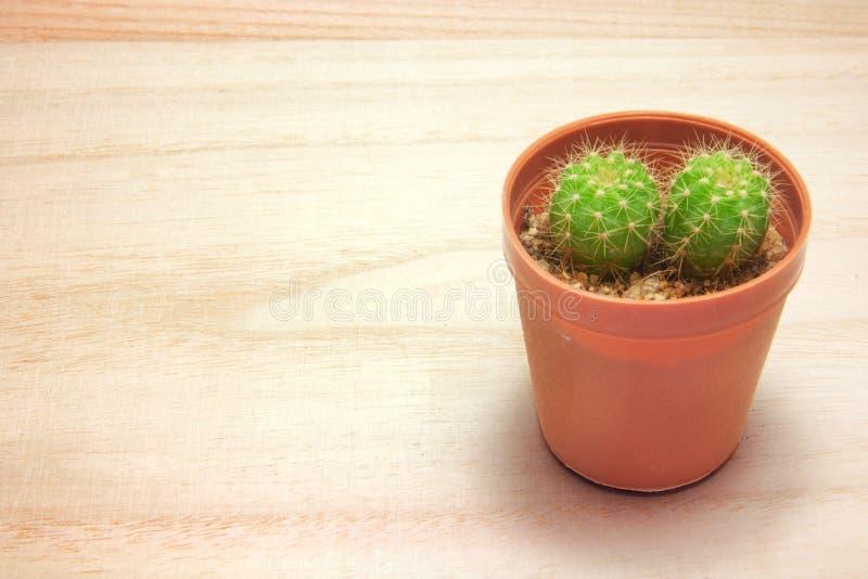 Pianta del cactus sulla tavola di legno immagine stock