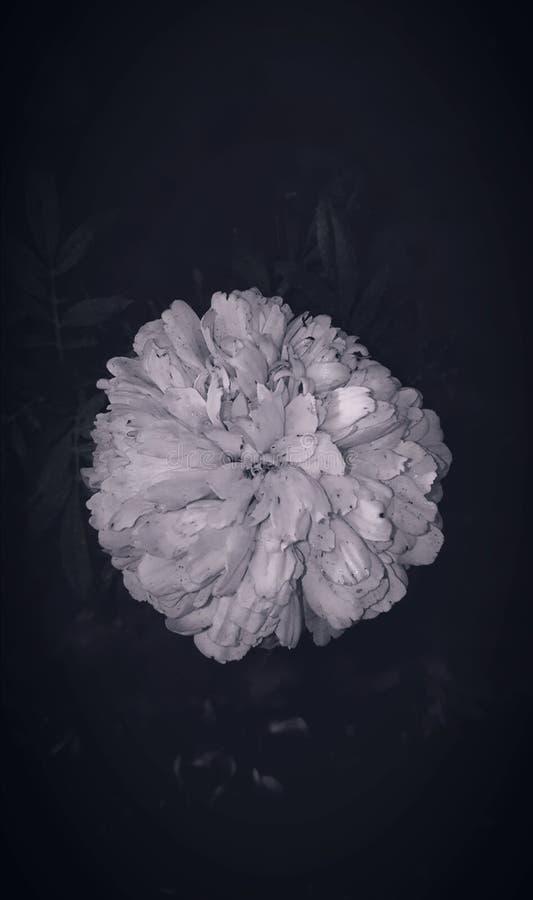 Pianta del fiore immagini stock libere da diritti