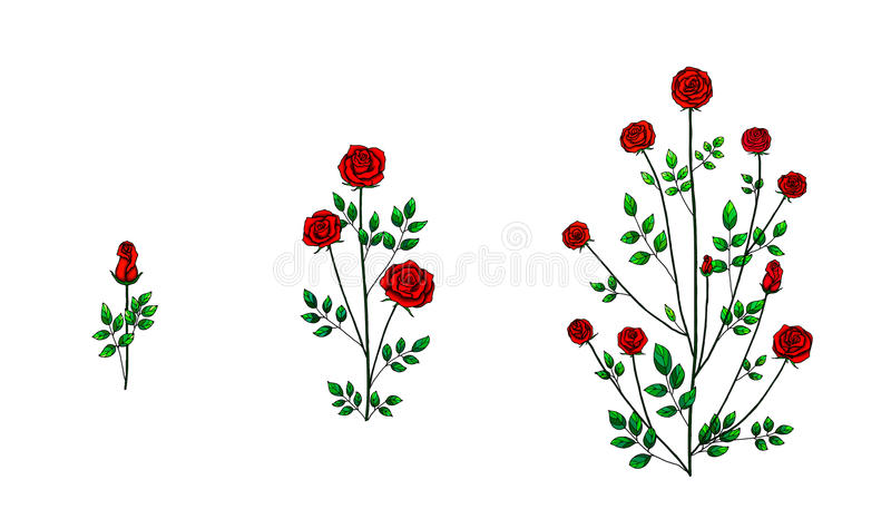 Pianta del fiore di Rosa royalty illustrazione gratis