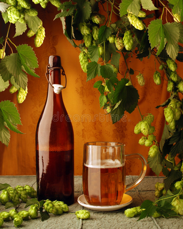 Pianta del luppolo e della birra fotografie stock