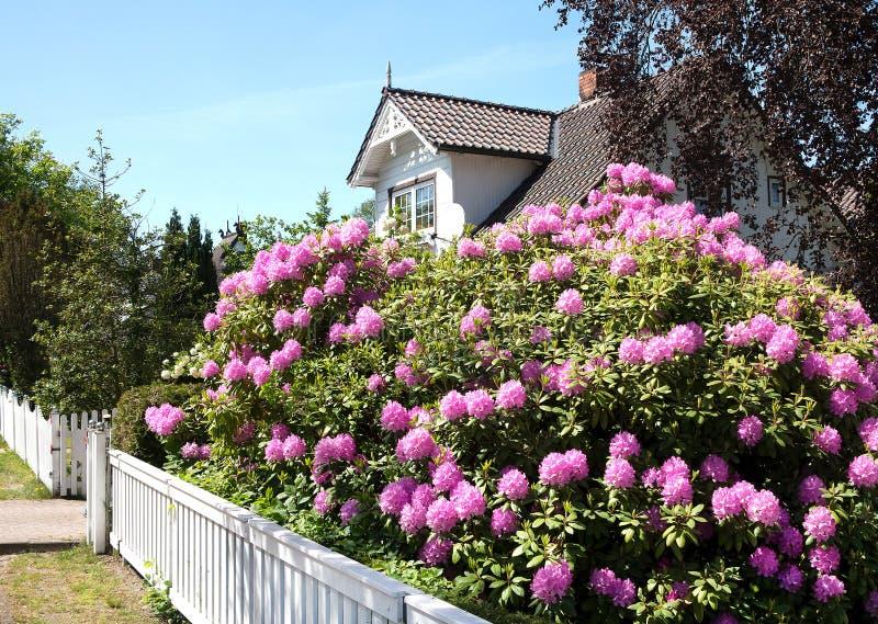 Pianta del rododendro nel giardino di una casa di legno for Una pianta della casa di legno