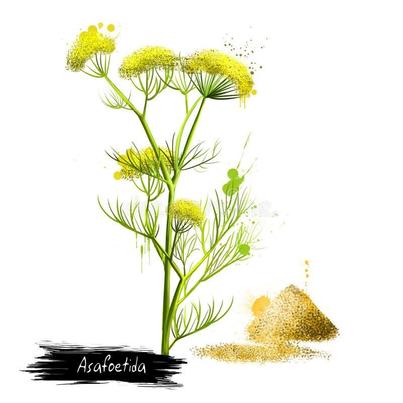 Pianta dell'assafetida e mucchio di polvere hing illustrazione vettoriale