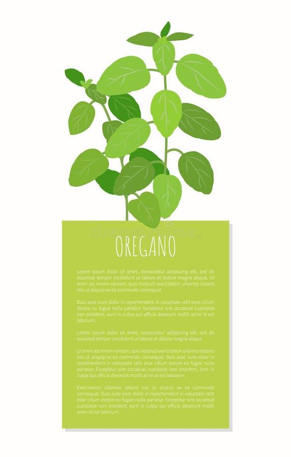 Pianta dell'origano, spezia di erbe, prodotto naturale saporito royalty illustrazione gratis