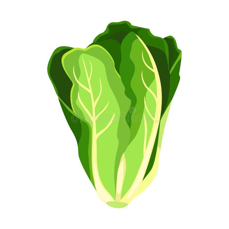 Pianta della lattuga dell'insalata della lattuga romana Foglie di verdure verdi fresche organiche della natura illustrazione vettoriale