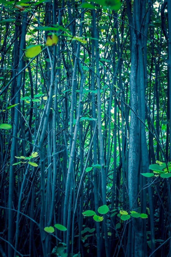 Pianta di autunno tronchi degli alberi nella foresta immagine stock libera da diritti