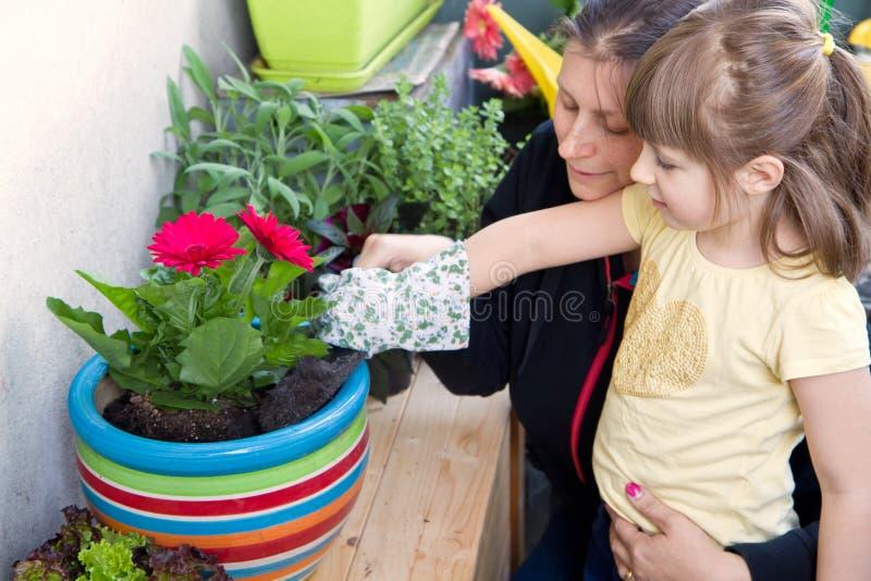 Pianta di giardinaggio del fiore del bambino e della madre immagini stock