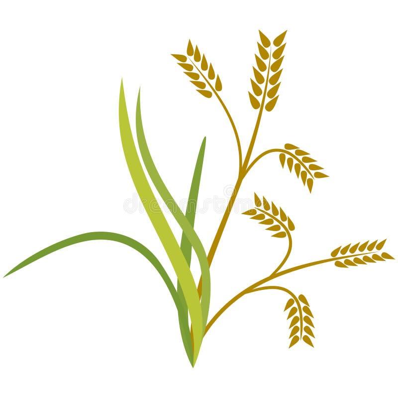 Pianta di riso illustrazione vettoriale