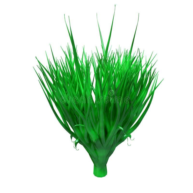 Pianta di Spirulina, alghe, ricche subacquei in proteina ed antiossidante potente Alga isolata su priorit? bassa bianca illustrazione di stock