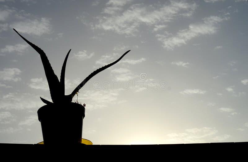 Pianta di Vera dell'aloe sul vaso immagine stock libera da diritti