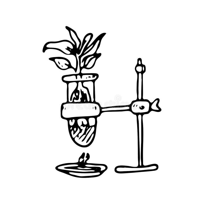 Pianta disegnata a mano nell'icona di scarabocchio della boccetta Schizzo nero disegnato a mano illustrazione di stock