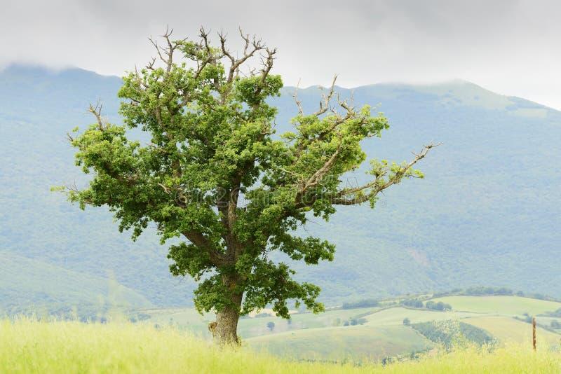 Pianta e paesaggio tipici in Marche fotografie stock libere da diritti