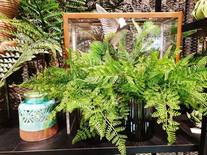 Pianta e vaso per la decorazione fotografia stock libera da diritti