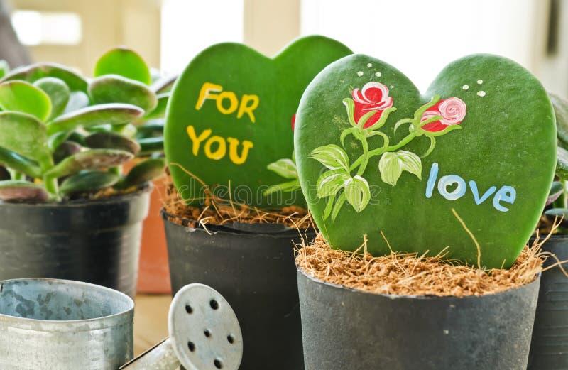 Pianta a forma di del cuore (Kerrii Hoya) fotografia stock