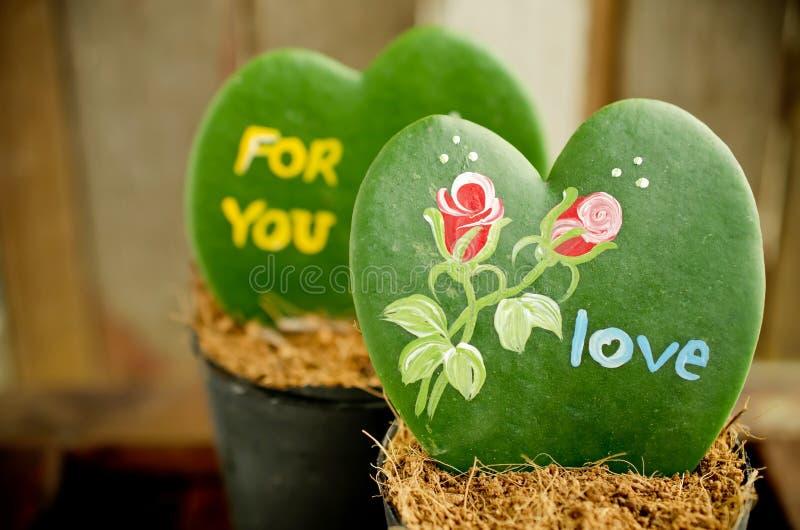Pianta a forma di del cuore (Kerrii Hoya) fotografia stock libera da diritti