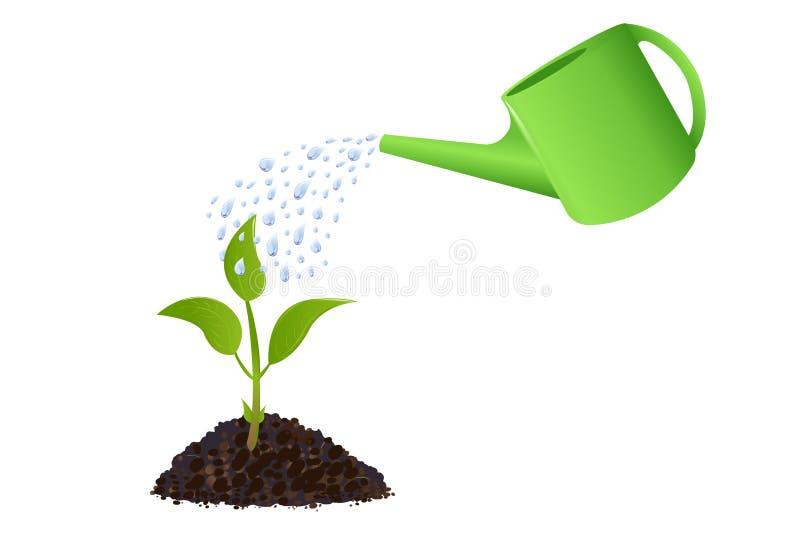 Pianta giovane verde con la latta di innaffiatura illustrazione di stock