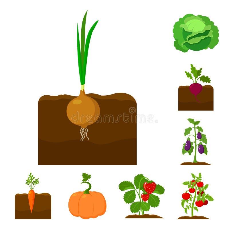 Pianta, icone di verdure del fumetto nella raccolta dell'insieme per progettazione Il giardino ed il raccolto vector l'illustrazi royalty illustrazione gratis