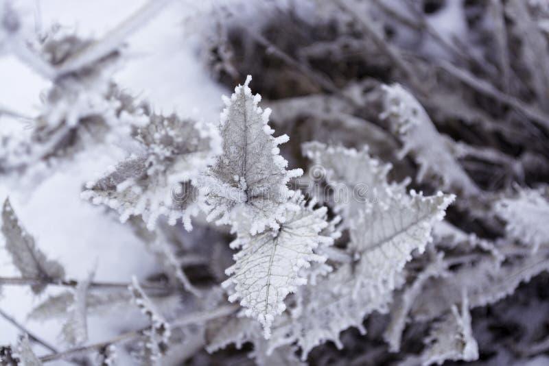 Pianta in inverno Per fondo fotografie stock