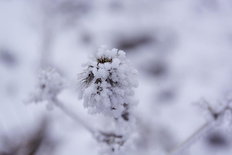 Pianta in inverno Per fondo immagine stock libera da diritti