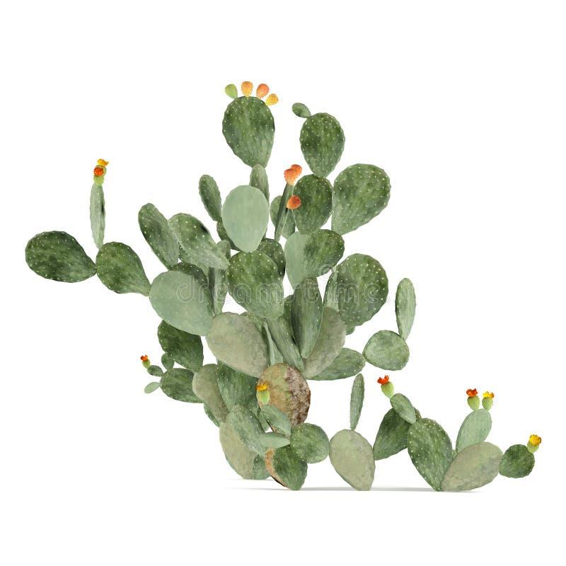 Pianta isolata. Opuntia ficus indica illustrazione di stock
