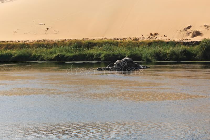 Pianta l'isola a Assuan fotografia stock libera da diritti