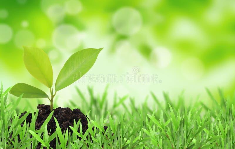 Pianta nell'erba immagini stock libere da diritti