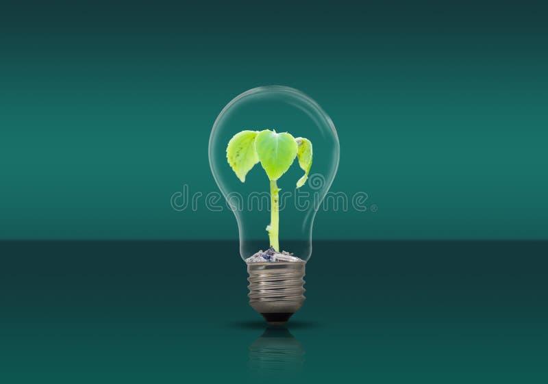 Pianta nella lampada, concetto dell'ambiente di conservazione immagini stock