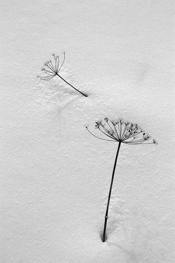 Pianta nello stile minimalista fotografia stock libera da diritti