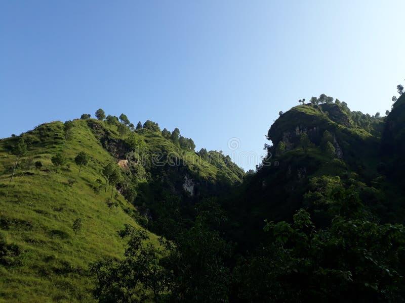 Pianta occidentale del Nepal immagini stock libere da diritti