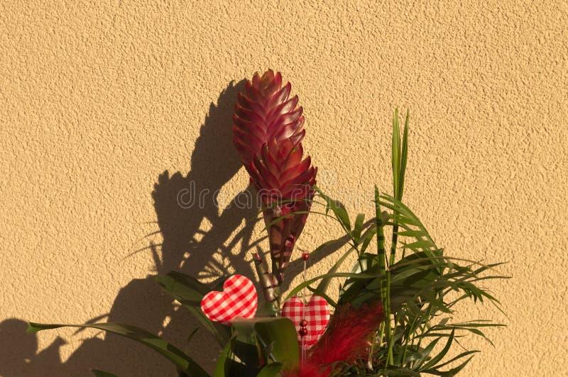 Pianta ornamentale con i fiori rossi e due cuori fotografia stock