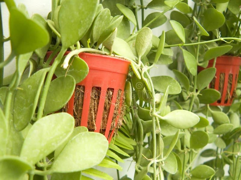 pianta poted sul giardino verticale fotografie stock libere da diritti
