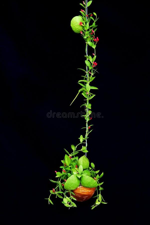 Pianta rampicante verde con poco fiore rosso fotografia stock
