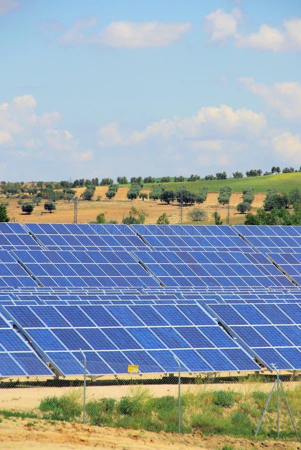 Pianta solare sul campo fotografie stock