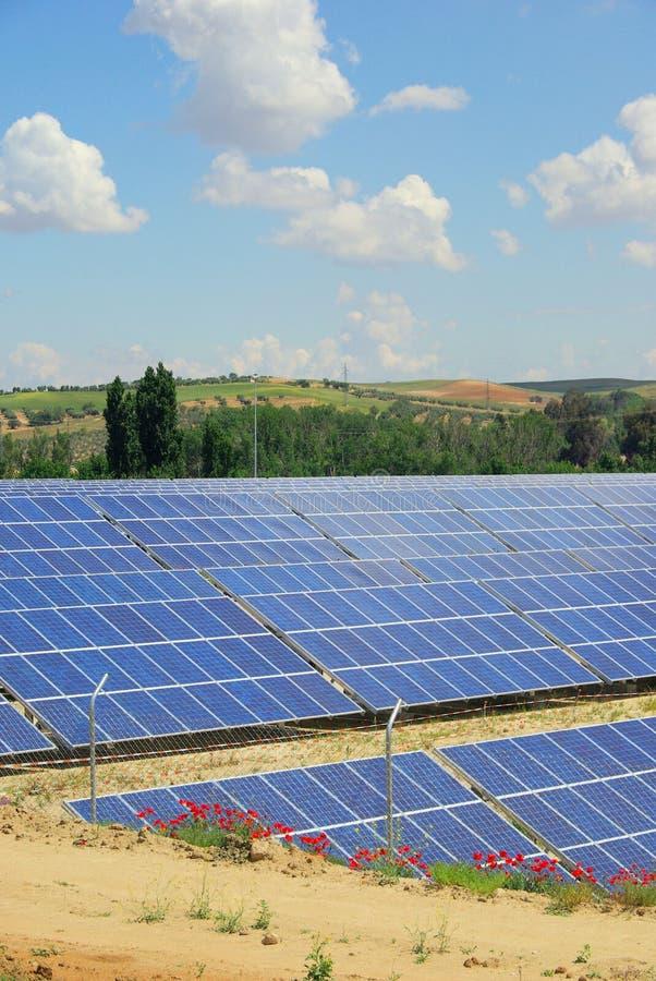 Pianta solare sul campo fotografie stock libere da diritti