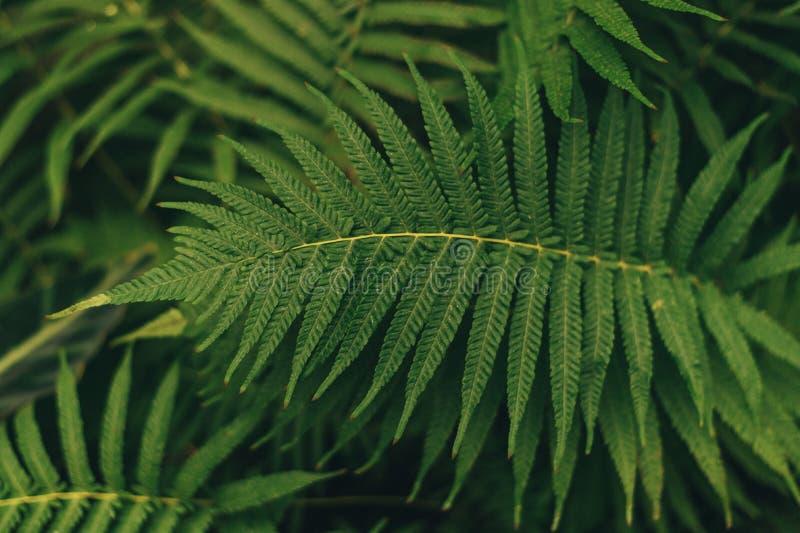 Pianta sottile verde delle foglie di palma che cresce nelle piante selvatiche e tropicali della foresta, colore astratto delle vi fotografia stock
