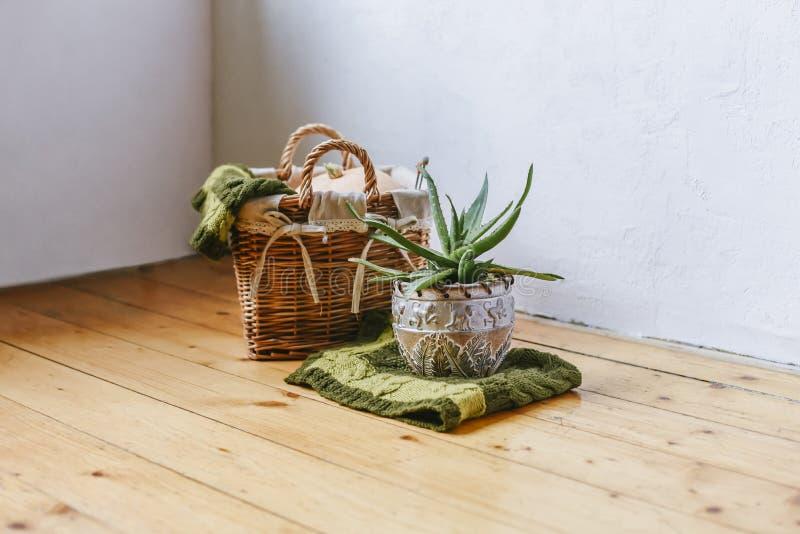 Pianta succulente in vaso di argilla su un fondo di legno Zucca in un canestro tessuto con il plaid verde Decorazione domestica R fotografie stock