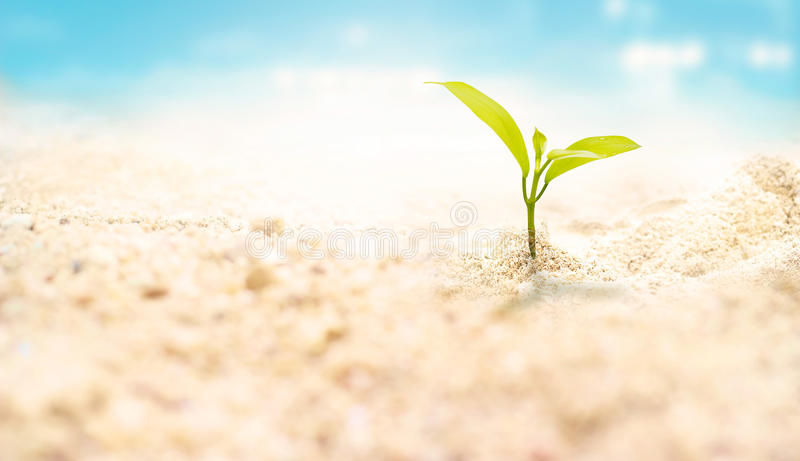 Pianta sul fondo di estate della spiaggia della sabbia di mare fotografia stock