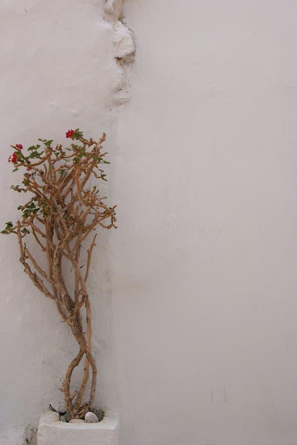 Pianta sul walll fotografie stock libere da diritti