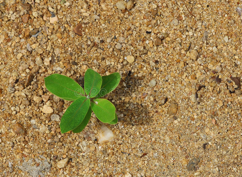 Pianta sulla sabbia - nuova vita immagini stock libere da diritti