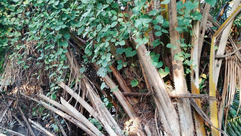 Pianta tropicale fotografia stock libera da diritti